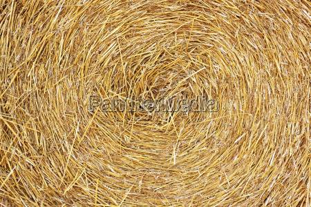 comida agricola primer plano industria marron