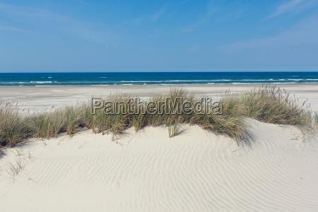 fiesta vacaciones playa la playa orilla