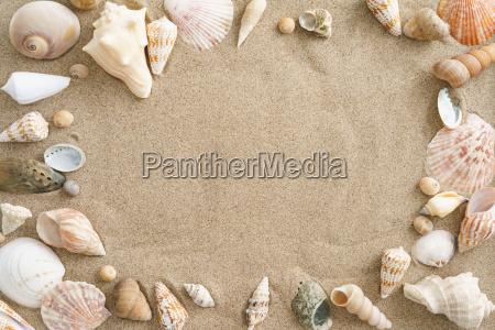 mejillones en la arena
