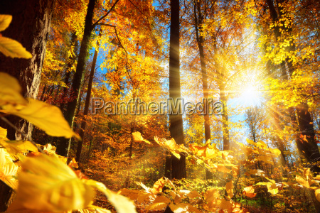 bright autumn in the forest with