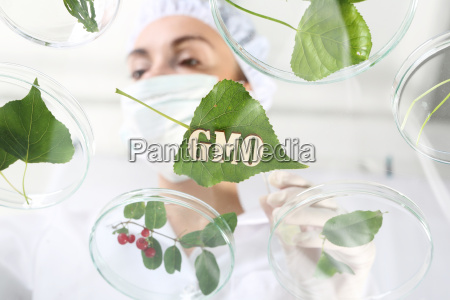 laboratory analysis of plants
