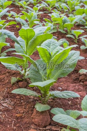 agricola color suelo agricultura de plantas