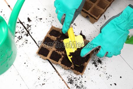 maizal siembra globo tierra suelo semillas