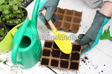 siembra de plantas en la casa