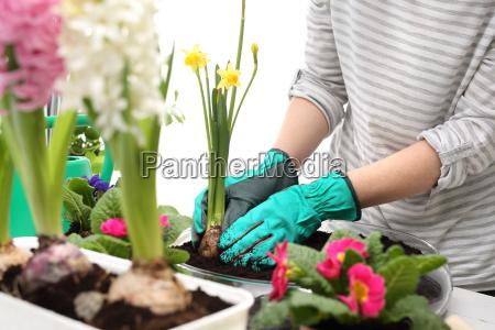 flor las maravillosas flores flowerage florecer