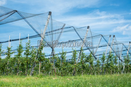 agricultura campo manzanos monocultivo cielo