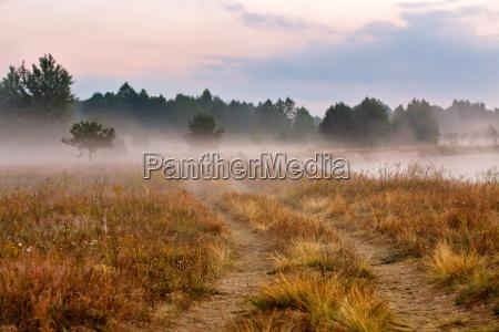 foggy dirt road at summer morning