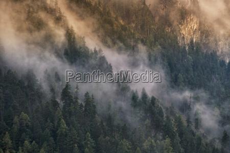 montanyas niebla abetos misterioso luz mistico