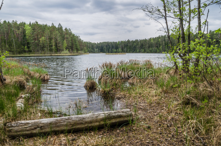 spring landscape in the forest lake
