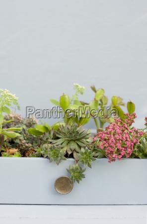 fotografia foto ver decoracion cactus jardineria