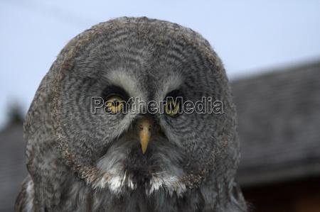 pajaro austria aves halconero cetreria buhos