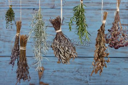 hierbas que cuelgan para secar