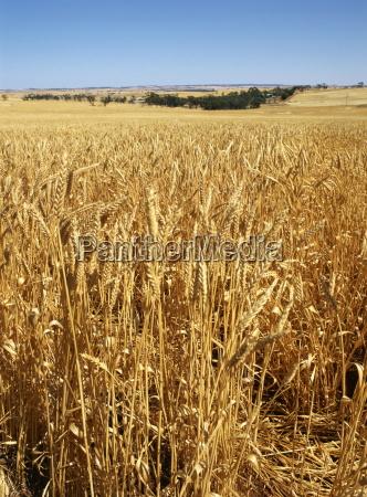 paseo viaje agricultura australia al aire
