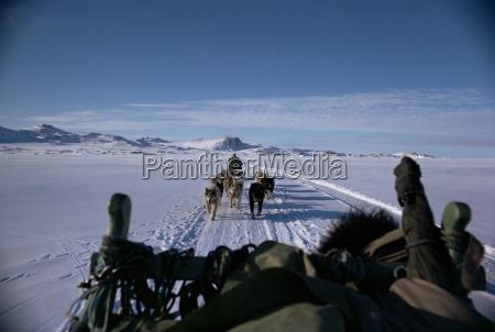 paseo viaje color animal trafico artico