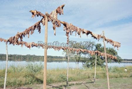 carne de jabali colgando de secarse