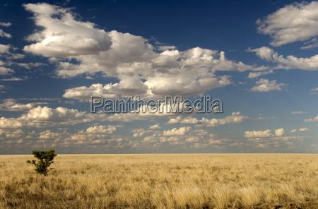 paseo viaje horizonte campo australia horizontalmente