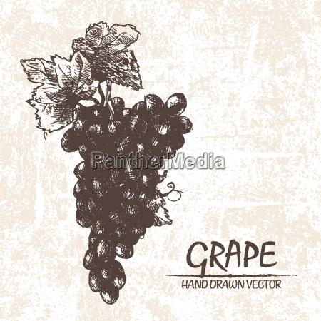 vector digital detallado mano de uva