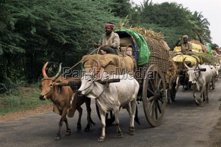 paseo viaje color animal trafico asia