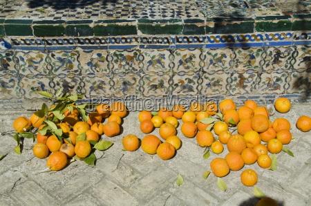 paseo viaje europa espanya horizontalmente fruta