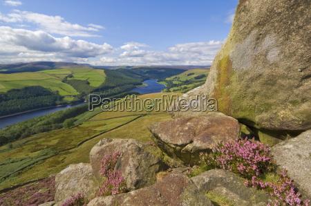 heather moorland above ladybower reservoir whinstone