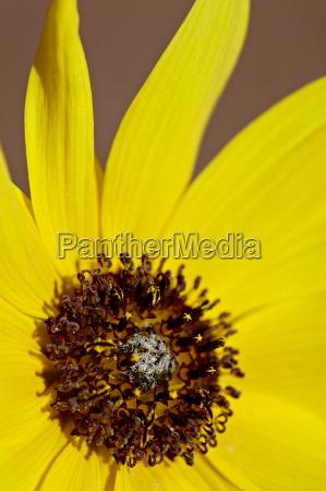 primer plano detalle flor planta flores