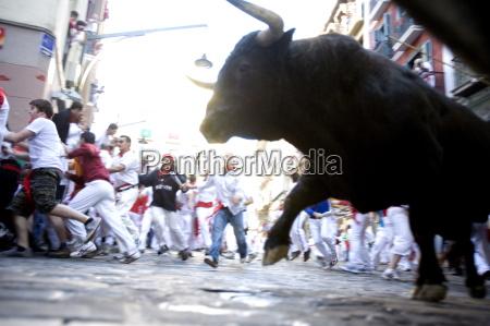 running of the bulls encierro san