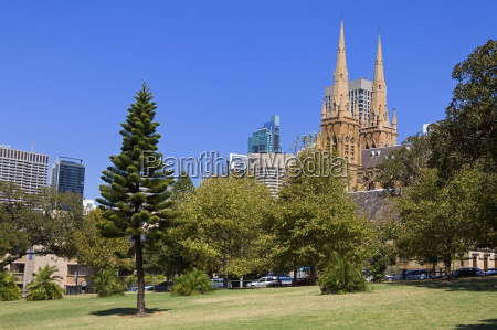 arbol catedral australia horizontalmente al aire