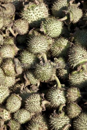 color asia india frutas fruta al