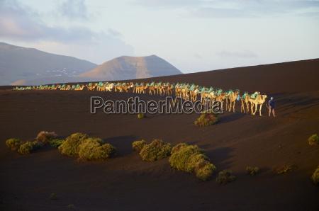 ir paseo viaje desierto animal los