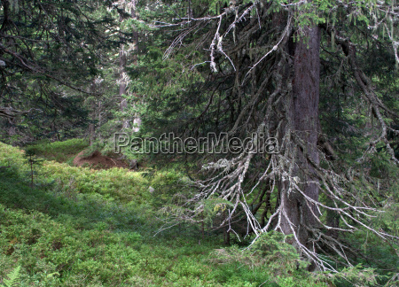 parque nacional selva reserva natural paisaje