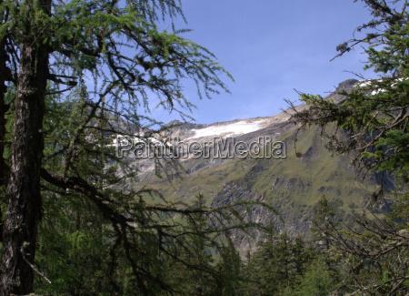 arbol alpes austria europa rocas rock