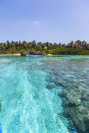 paseo viaje arbol trafico maldivas vehiculo