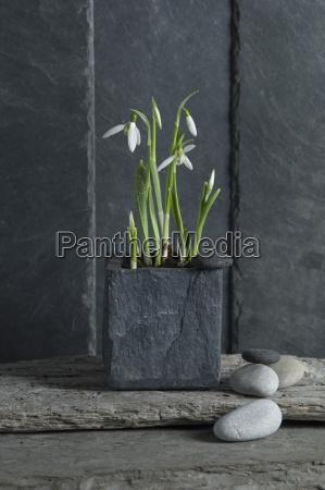piedra flor planta frescura fotografia foto
