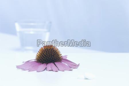 vidrio vaso beber bebida flor planta
