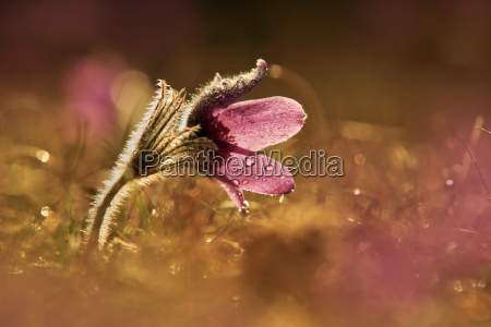 flor planta luz del sol frescura