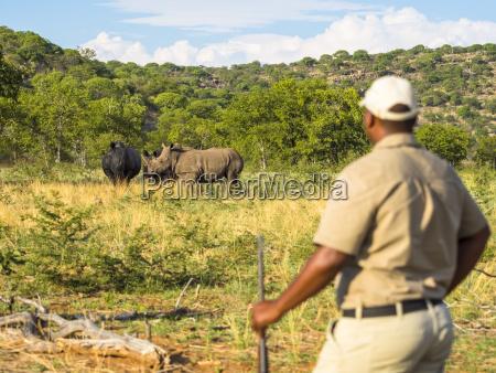 namibia al aire libre posicion fauna