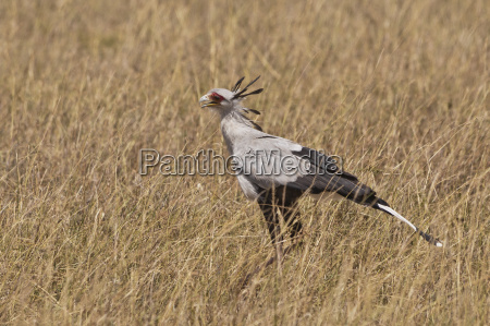 paseo viaje animal pajaro africa kenia