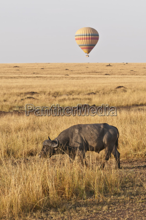 ir animal parque nacional africa kenia
