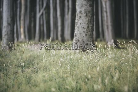 arbol alemania al aire libre fotografia