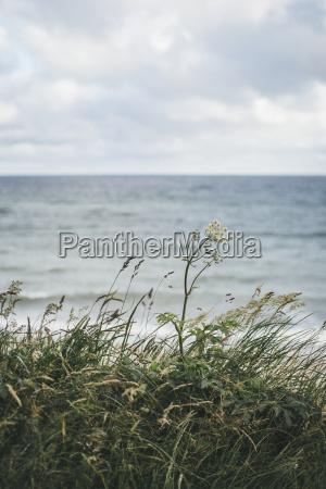 alemania nienhagen hierba frente al mar