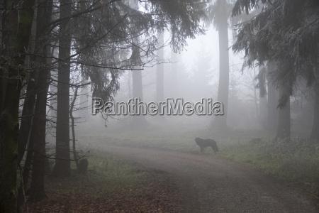 arbol animal neblina mascotas perro alemania