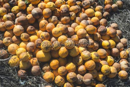 naranja suelo marron agricultura luz del