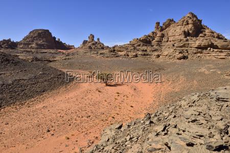 paseo viaje arbol desierto al aire