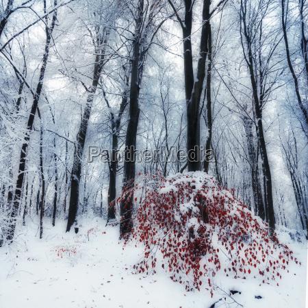 arbol invierno catarro alemania al aire