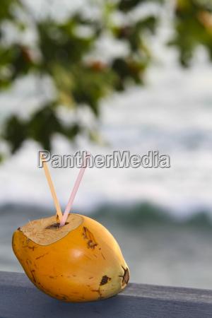 naranja paseo viaje beber bebida arbol