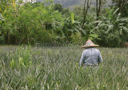 personas gente hombre paseo viaje agricultura