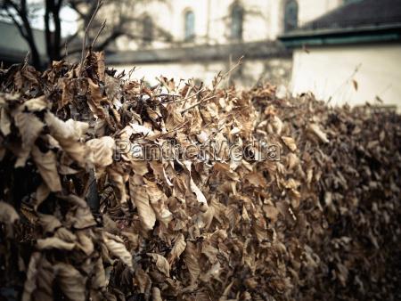 hoja iglesia marron hojas alemania al