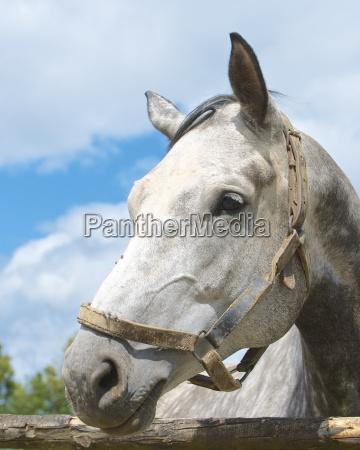 caballo animal retrato retrato de un