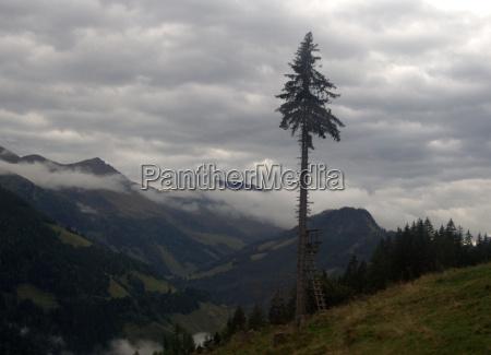 arbol parque nacional austria hochsitz las