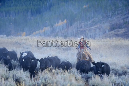 usa wyoming big horn mountains cowgirl